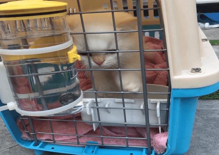 Cách Vận Chuyển Thú Cưng Chó Mèo Đi Xa