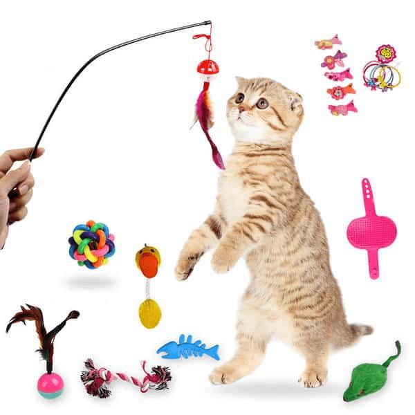 Cách Vận Chuyển Thú Cưng Chó Mèo