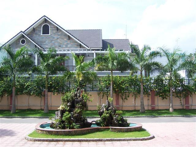 Trồng cây dừa cảnh trước nhà