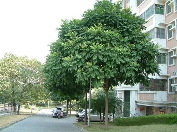 Trước nhà nên trồng cây gì
